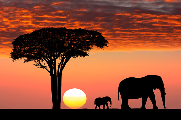 africa-cruise-safari